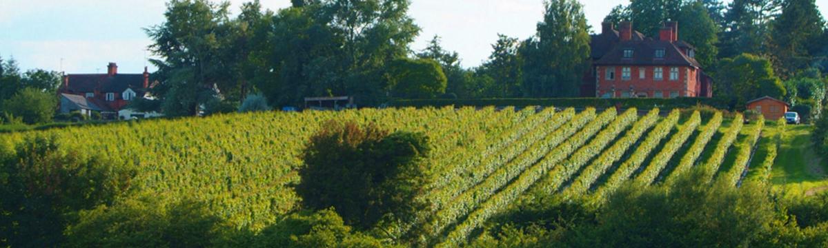 Wine Guild UK